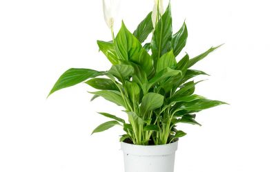 Go Green this Blue Monday to lift your spirits says Liverpool houseplant specialist